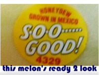 this melon's ready 2 look